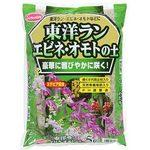 Sat stevia Oriental orchid, Calanthe, Omoto