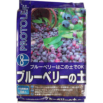 Blueberry of soil
