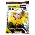 Chrysanthemum of soil Well done!